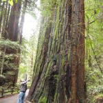 A perspective shot courtesy of my brother so you can see just how large the Redwoods are in Muir Woods.